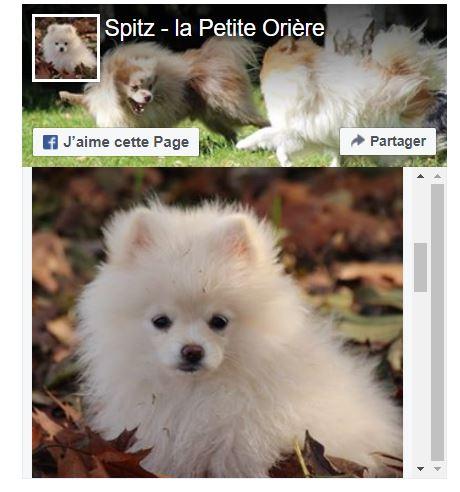 facebook spitz élevage